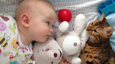Photo of Cats Make Babies LAUGH and HAPPY – Best Videos of Cat and Baby