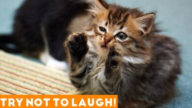 Photo of Try Not To Laugh Funniest Animal Compilation 2018 | Funny Pet Videos
