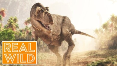 Photo of The Greatest Dinosaur Find Ever! It's A Dinosaur Attack! | Real Wild Documentary