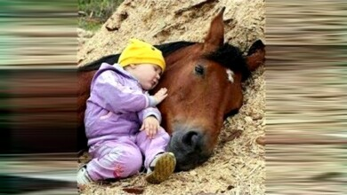 Photo of Cute Baby and Horse 👶🦄 Funny Baby and Animals Compilation