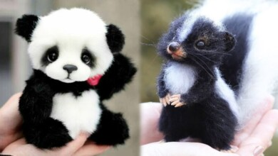Photo of AWW Animals SOO Cute! Cute baby animals Videos Compilation cute moment of the animals #4